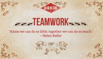 ants teamwork image
