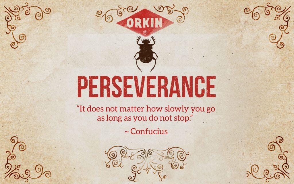 Bug Wisdom: Perseverance