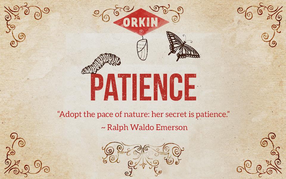 Bug Wisdom: Patience