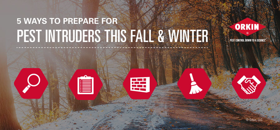5 Ways to Prepare for Pest Intruders This Fall and Winter