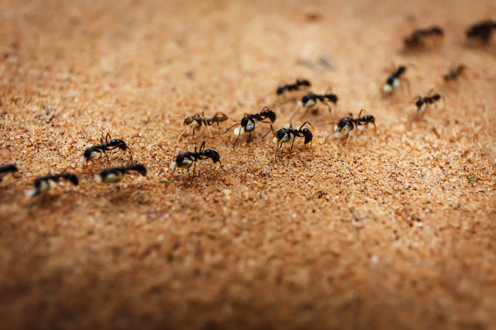 Image result for pics of busy ants