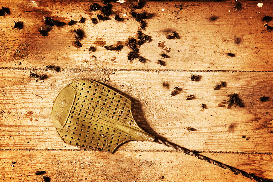 What Can You Do to Fend Off Flies?
