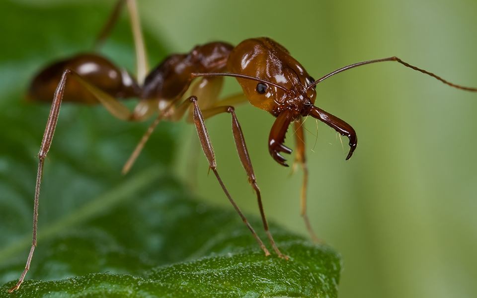 Top 6: Weird Ant Behaviors and Characteristics