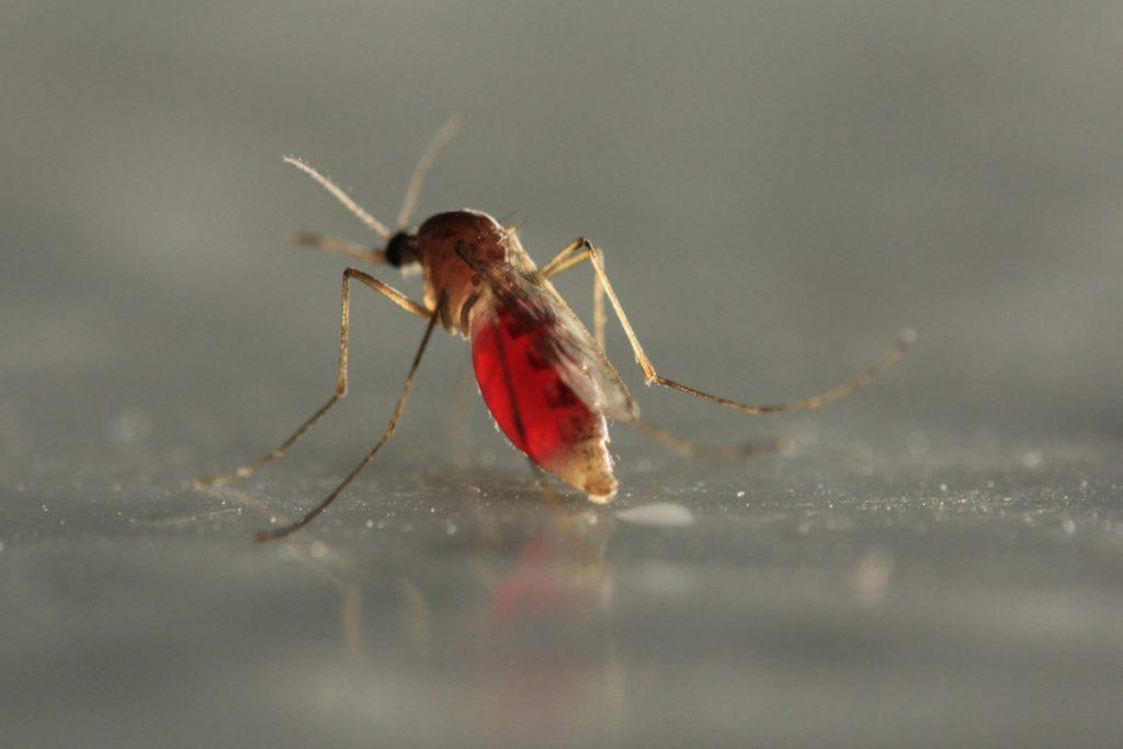Mosquito 101