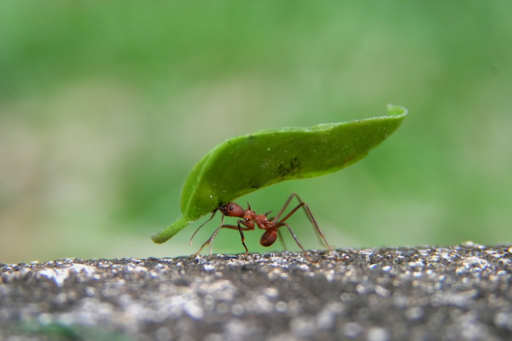 7 BrilliANT Facts about Ants