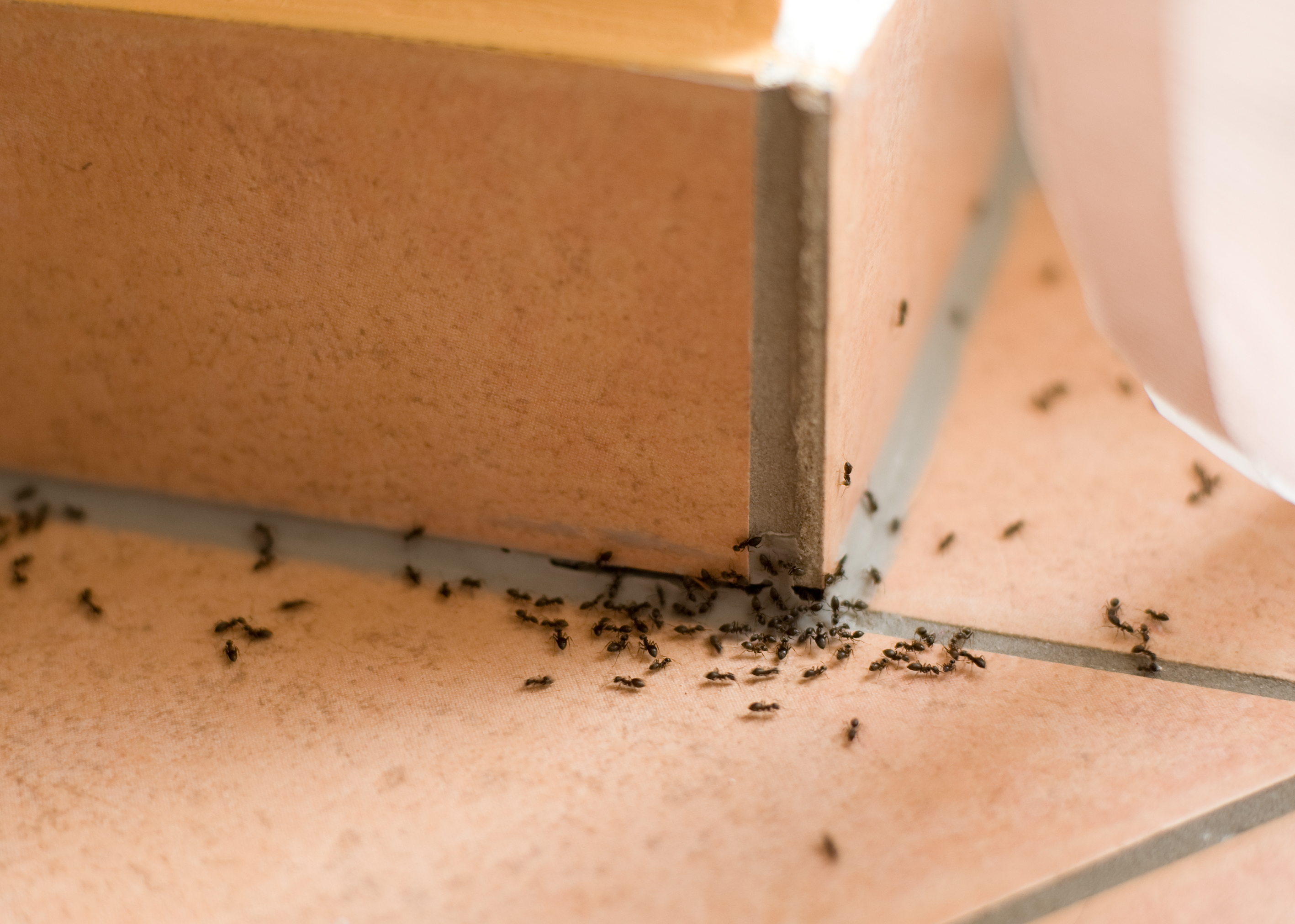 Ant Hot Spots You Should Know