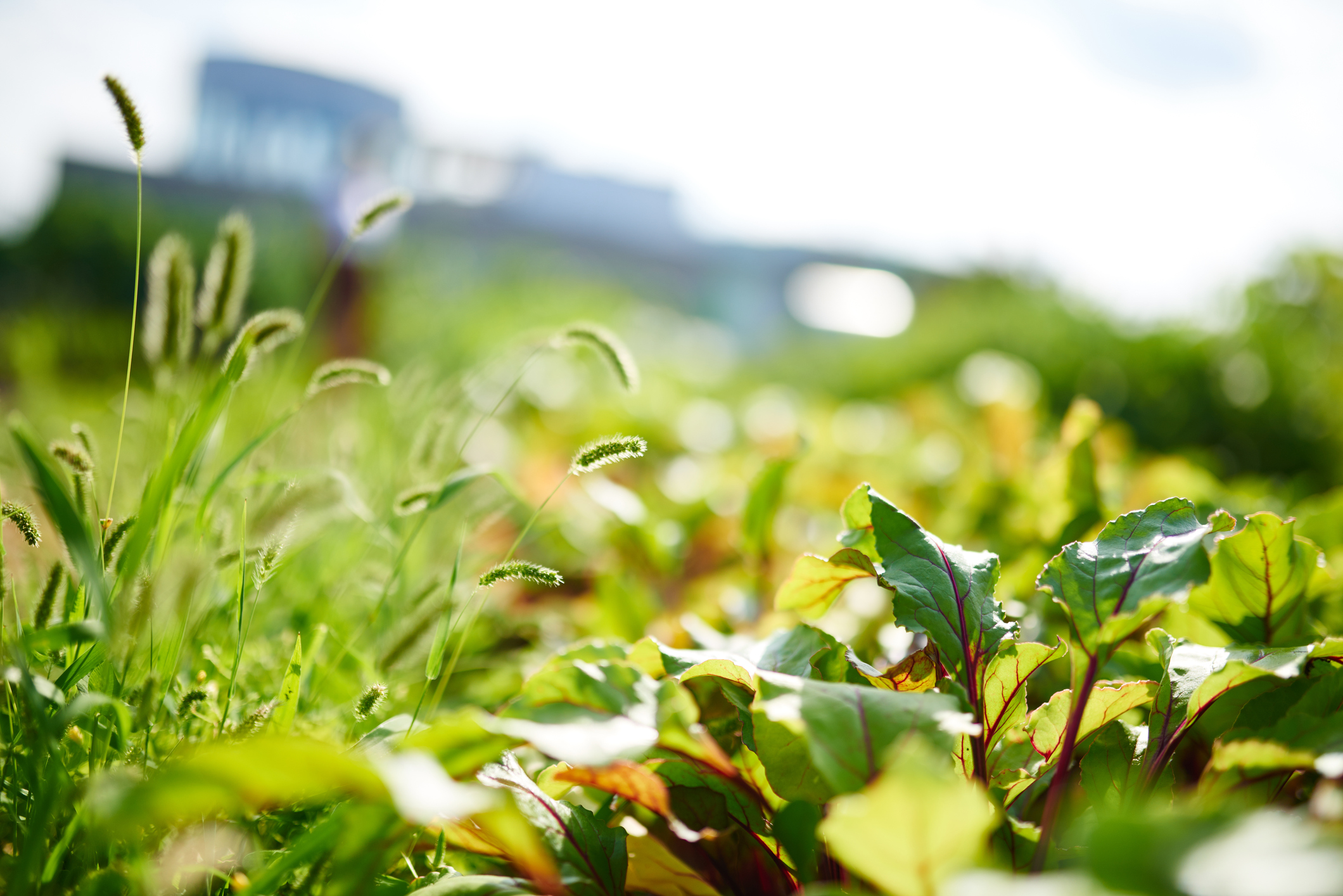 Going Green? 10 Tips to Help Keep Your Green Roofs Pest-Free