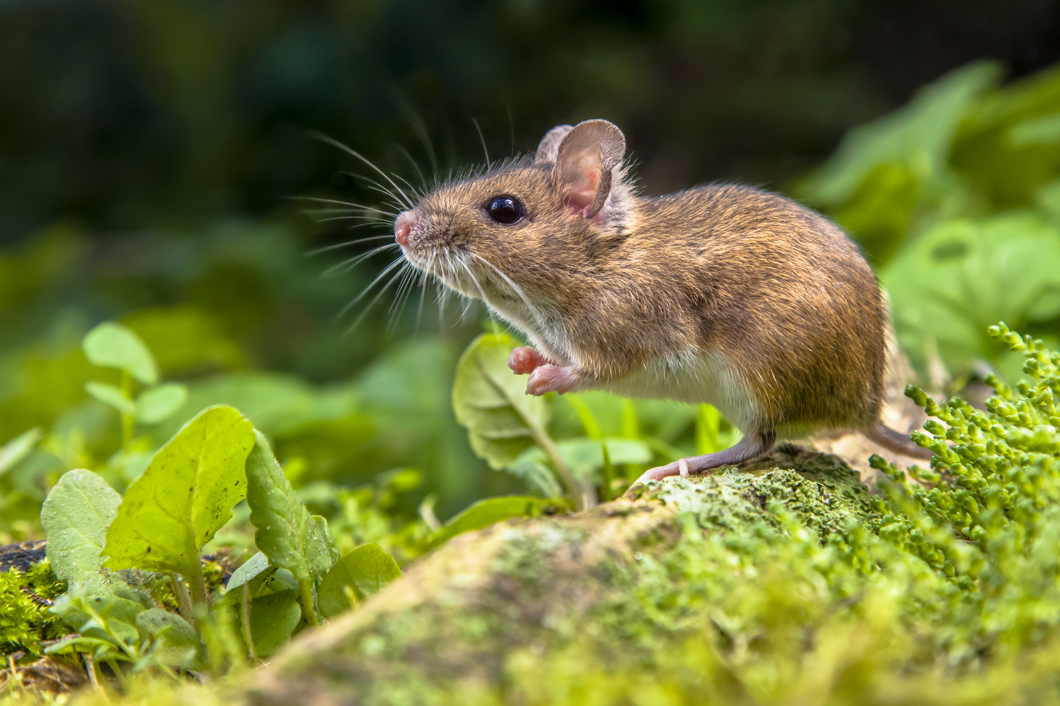 Six Facts to Help Prepare Your Rodent Defense