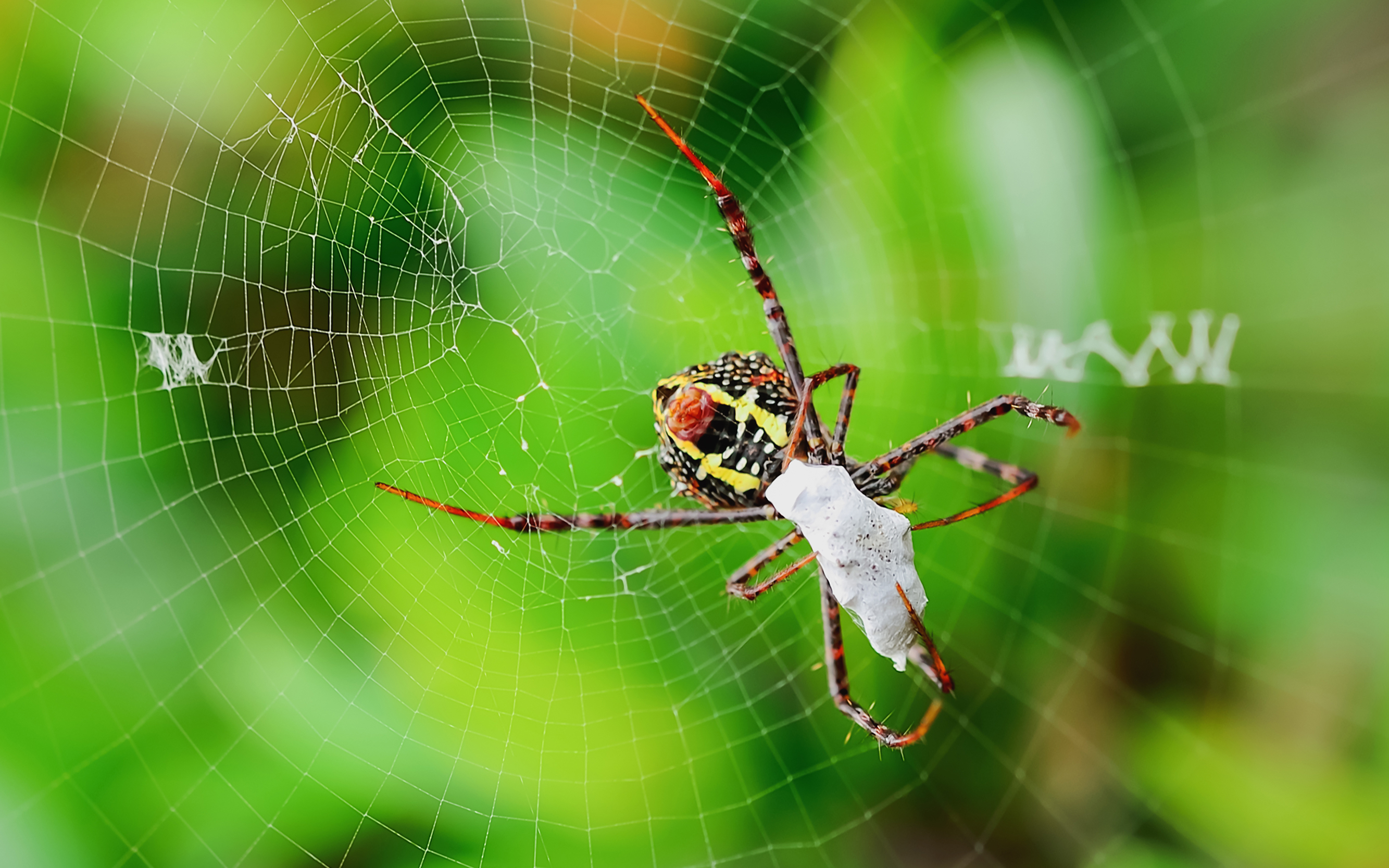 Spiders Eat Millions of Insects Every Year
