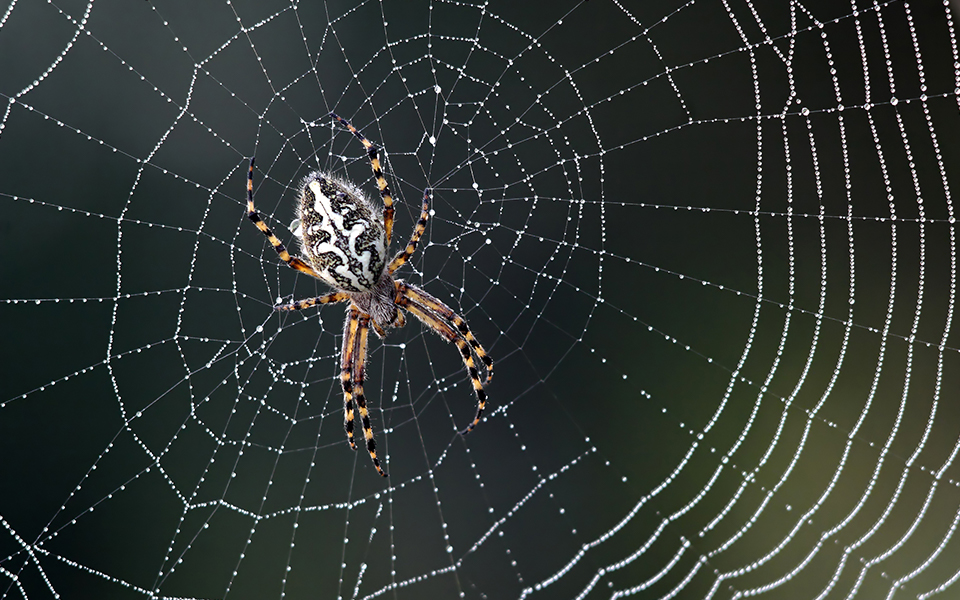 Are All Spiders Dangerous?