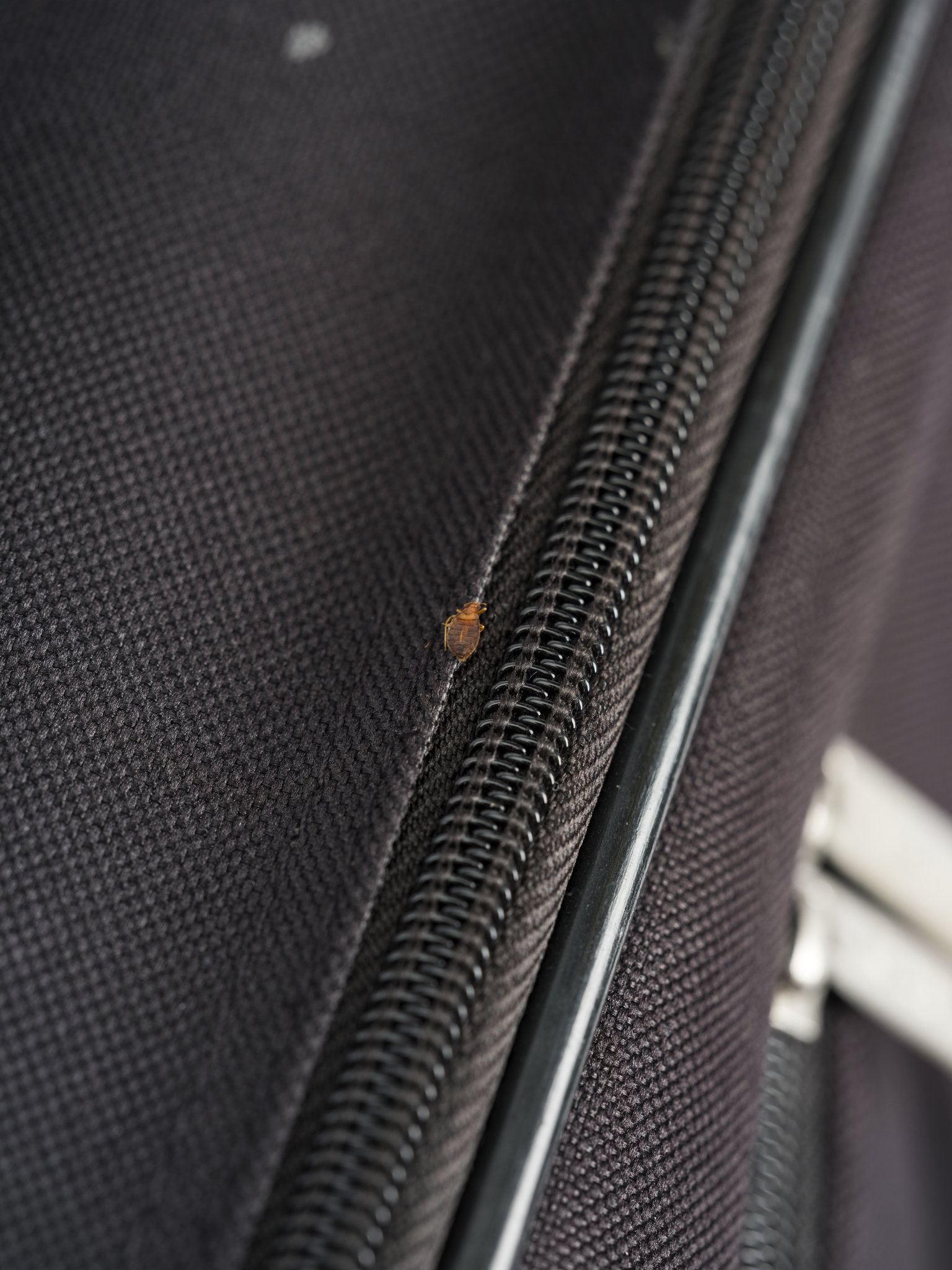picture of a bed bug on luggage