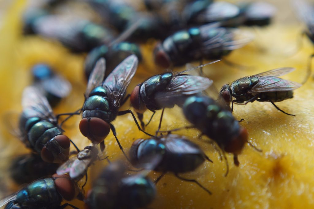 Multiple flies on bread image 1024x681