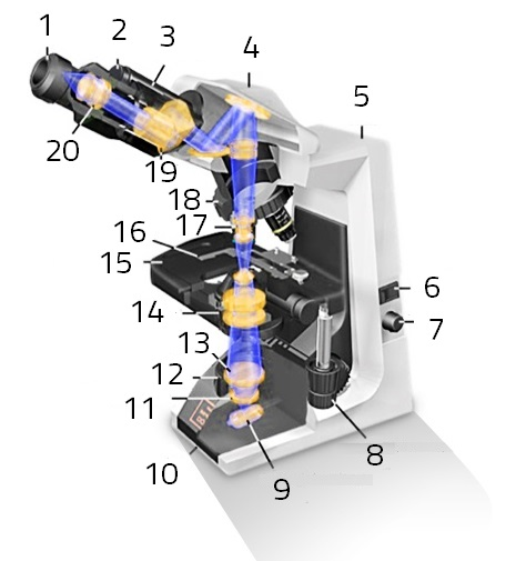Figure 1: Parts Of The Light Microscope: 1. Eyepiece, 2. Interpupillary  Adjustment, 3. Binocular Tubes, 4. Head, 5. Stand, 6. On/off Switch, 7.