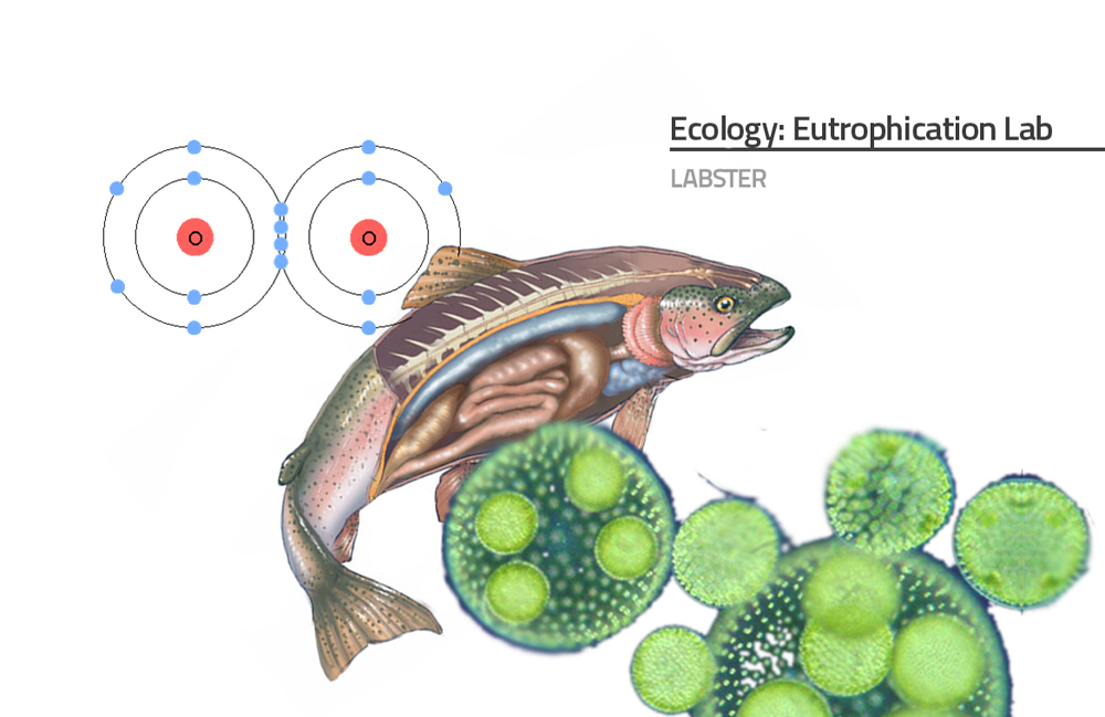 Introductory image of eutrophication simulation presents a big image of a fish with visible internal organs, a molecule of oxygen presented as two covalently bound atoms, and microscopic view of algae as big green spheres.
