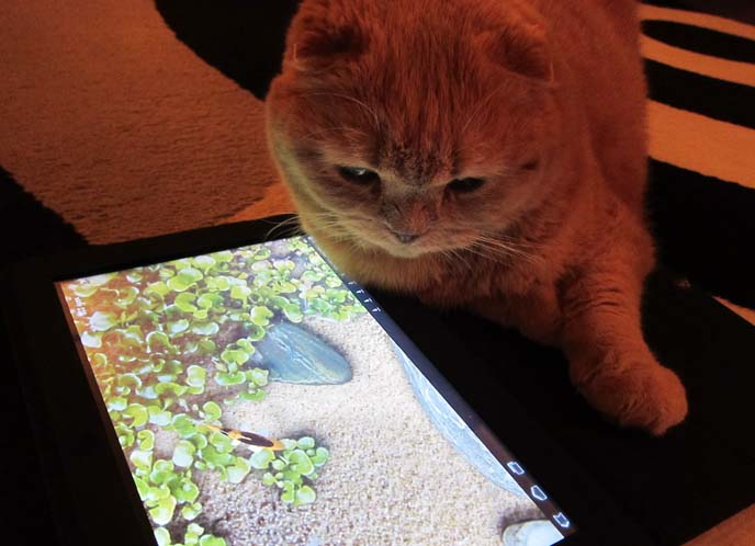 cat tablet games, ipad cats