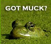 A frog swimming in muck with the text saying. Got muck?
