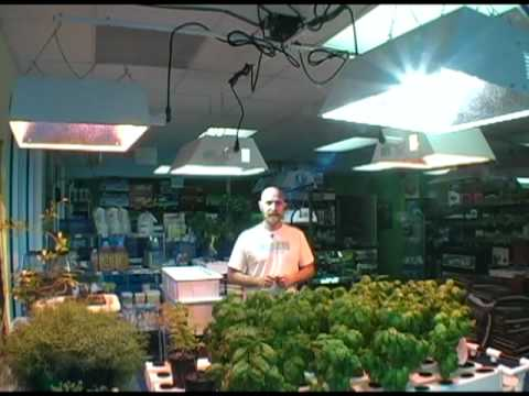 Plant grow light selection for indoor hydroponic gardening – Horizen Hydroponics