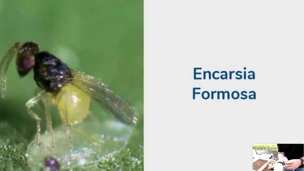 Pesticide-Free Pest Control | American Hydroponics Webinar