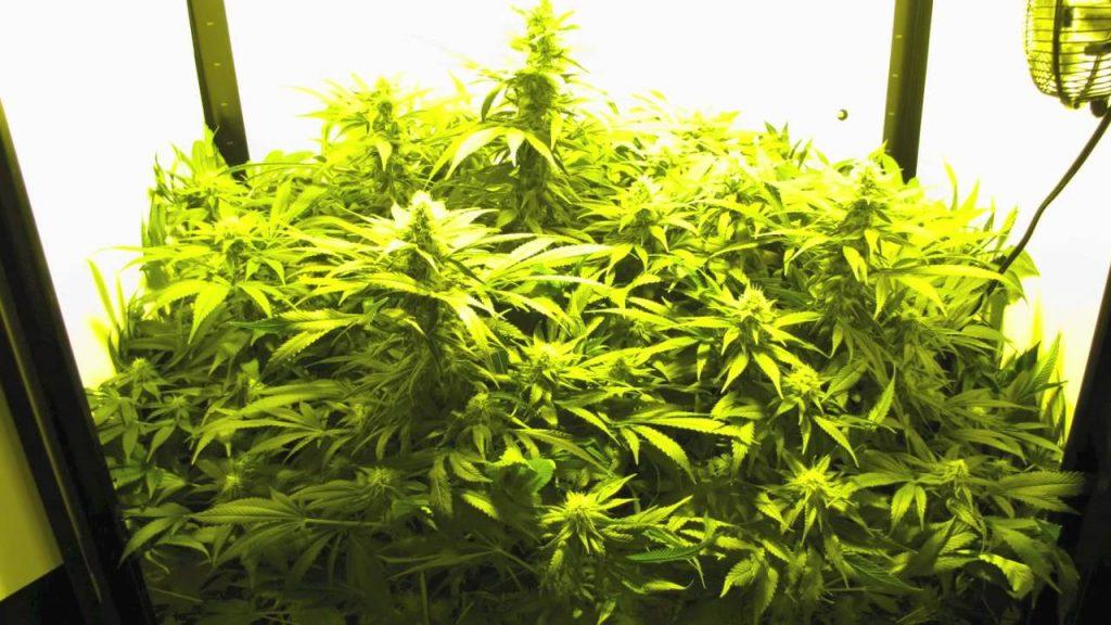 SuperCloset Deluxe Stealth Grow Box Medicinal Marijuana Hydroponics