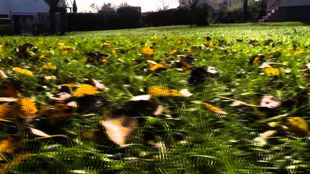 DIY Slider | first Testshots in the Garden
