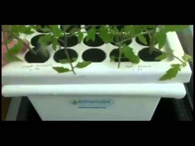 Cheap and  Simple Hydroponics – The KISS Method