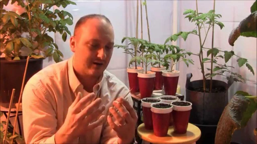 How To Quickly Germinate And Transplant Spinach Into Rockwool For Hydroponics