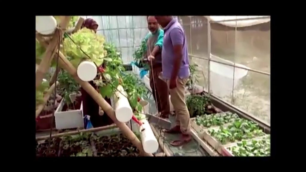 Low Cost Hydroponics System first ever at SAU Of Dhaka Bangladesh