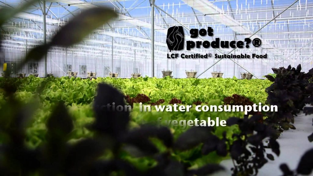 Floating lettuce hydroponics in Africa