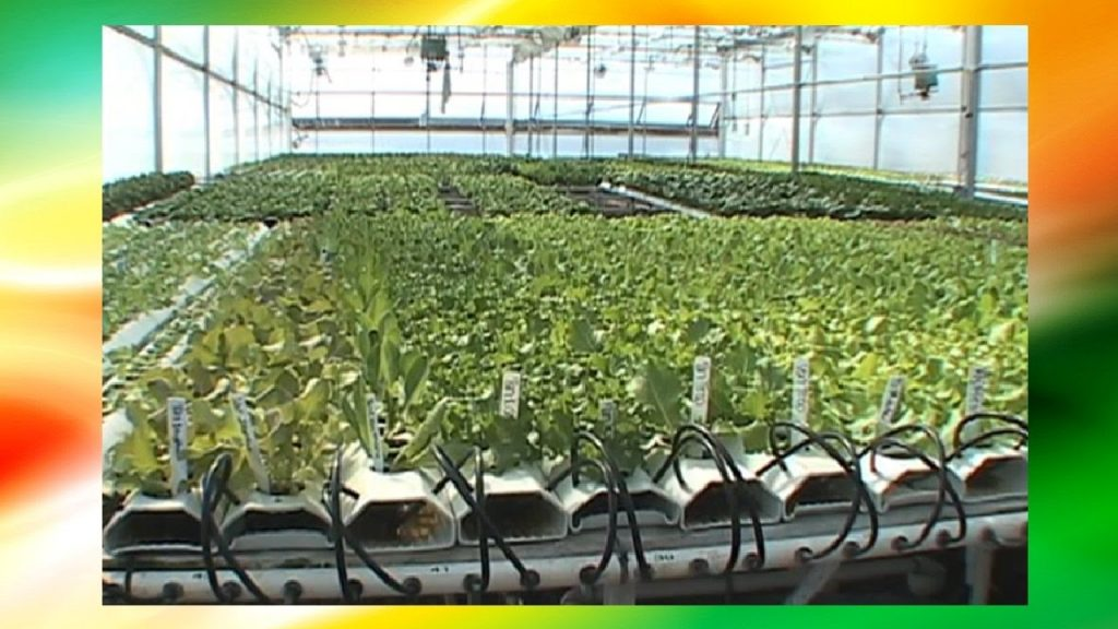 Hydroponics Farming For Beginners 🚰 🍃(Scientific Lab Techniques, Vertical Farming,Greenhouse Farm)