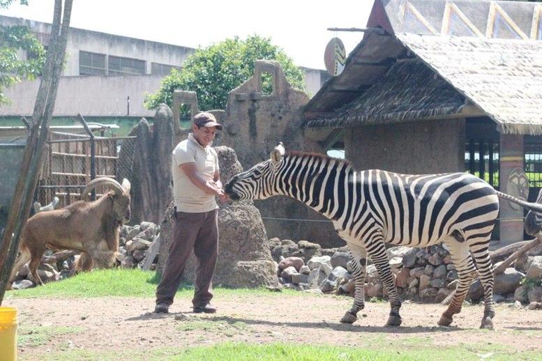 Para Juguetes De Donación Solicita La Mangueras Zoológico Aurora hrBsCodxtQ