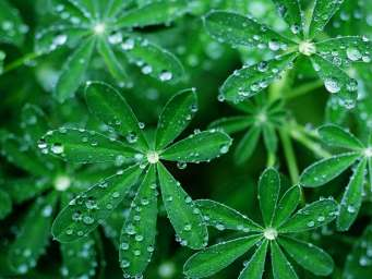 tender-green-leaves-with-drops-of-dew-in-the-morning_2048x1536.jpg