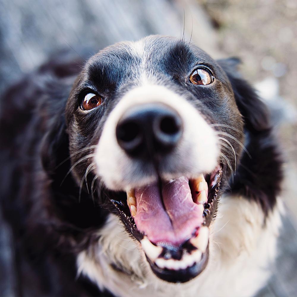 Animal Adoption Center | Lake Humane Society