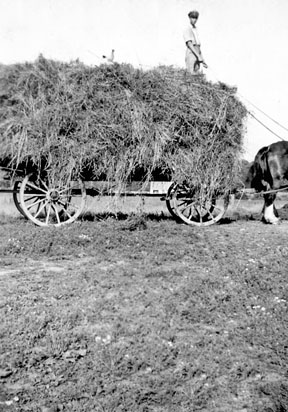 Wagon load of hay