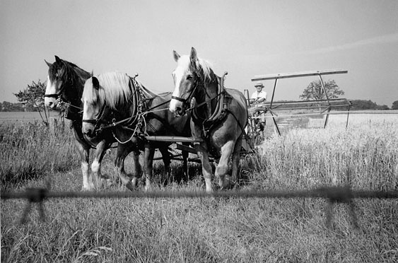 Horse drawn grain binder