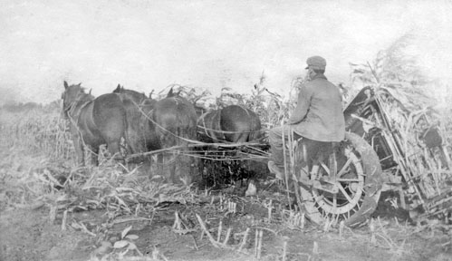 Carman Hall cutting corn in early 1930s