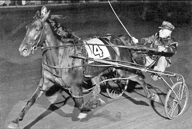 """Lindley Fraser driving """"Cinderella horse"""" Dr. Stanton"""