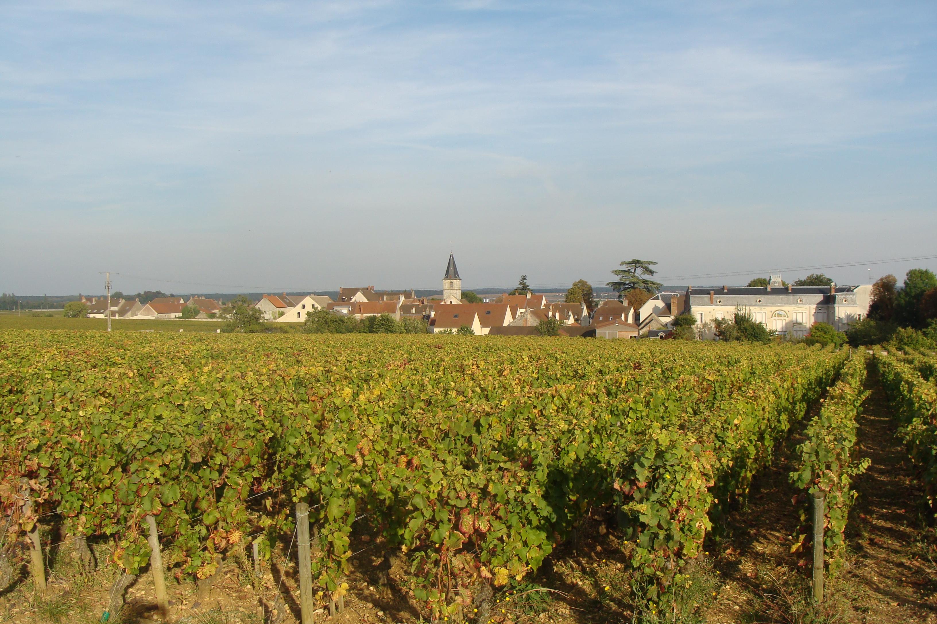 vineyards behind Vosné Romaneé