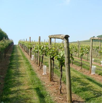 Devon Wine Week