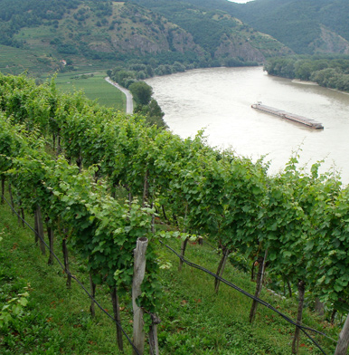 Wachau: wine terraces, apricots, Danube and exquisite villages in Austria