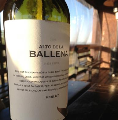 Alto de la Ballena: a big wine whale in Uruguay