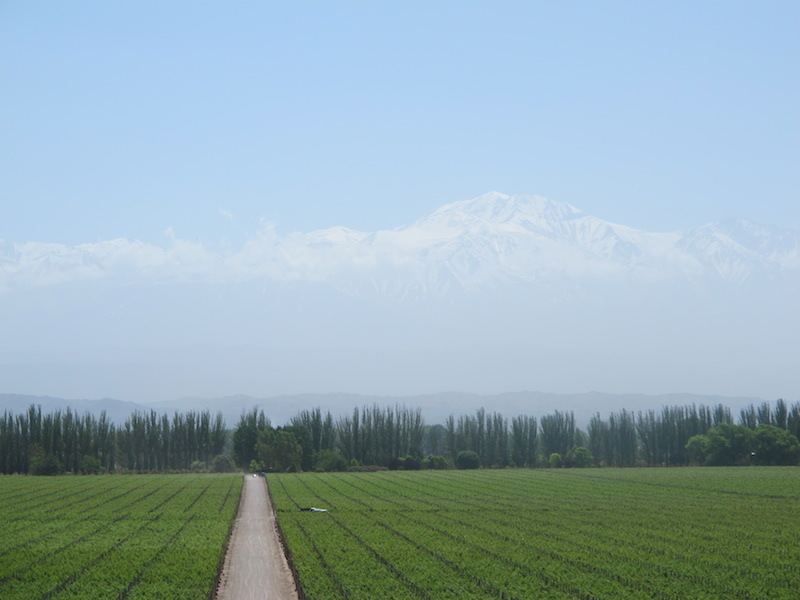 View of the Andes from Catena Zapata winery