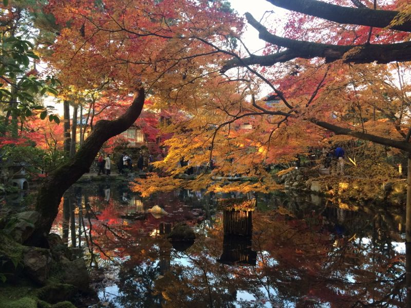 Leafs changing colours in Autumnal Japan