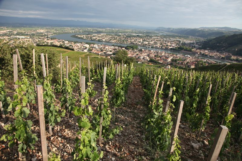 Rhône wine region
