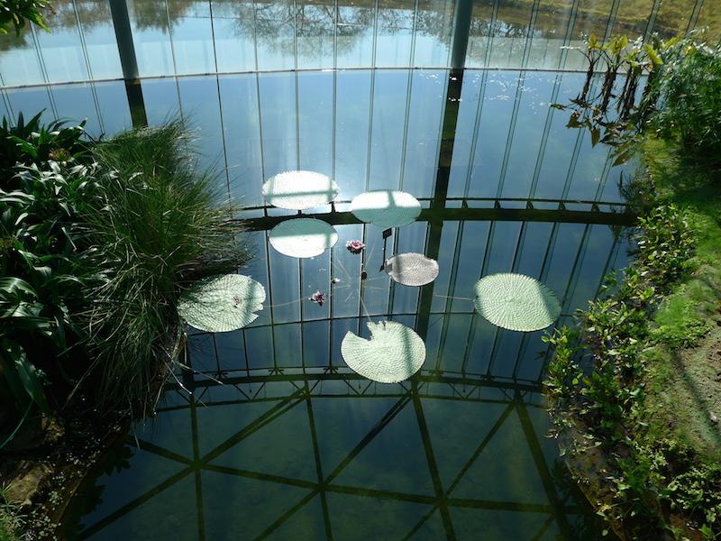 Lotus in Tokyo: mindfulness