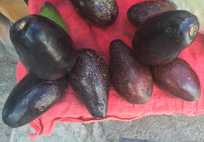 Dark skinned avocados