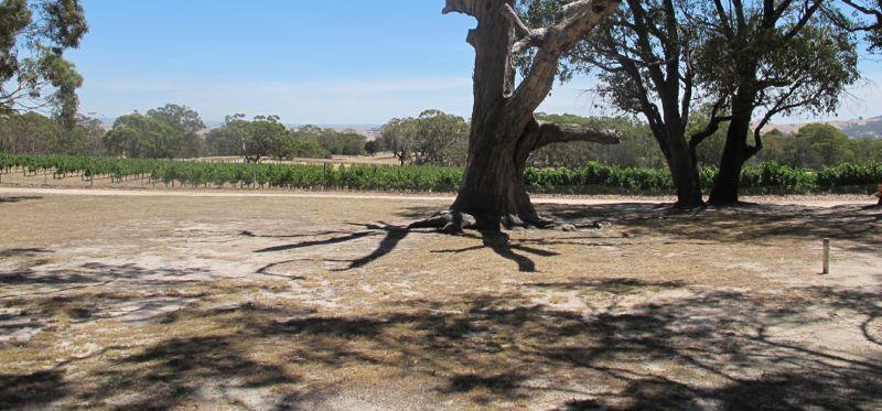 vineyeard in Australia