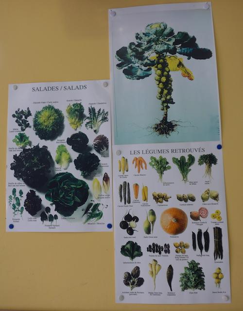 Seasonal produce in Liguria