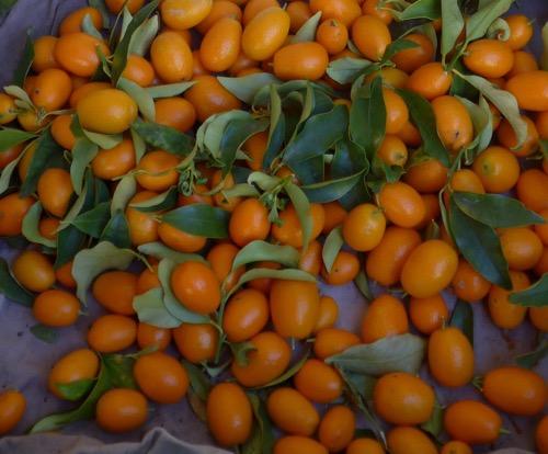 Kumquats from the Menton market