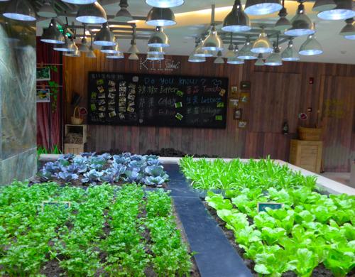 sustainable food indoor vegetable garden in China