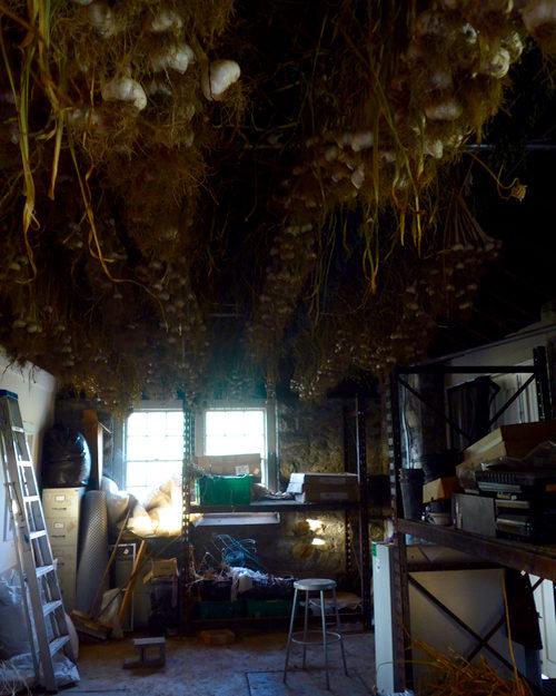 Stone Barns farm hanging garlic